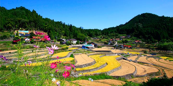 중산간 지역 진흥